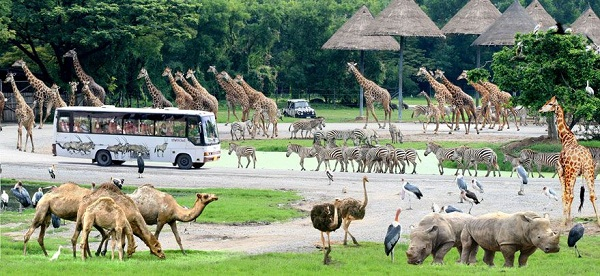 Khám phá thế giới động vật tại SAFARI WORLD