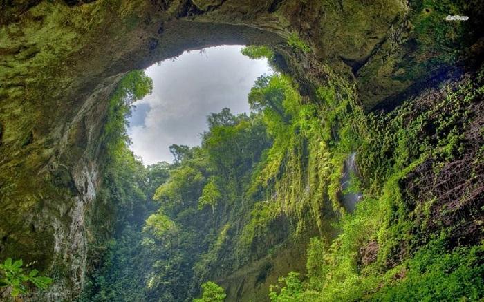 Thảm thực vật tự nhiên trong hang Sơn Đoòng